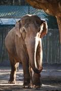 Читайте третий номер литературного online-журнала «Слон»!