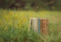 В Москве появятся дворовые библиотеки